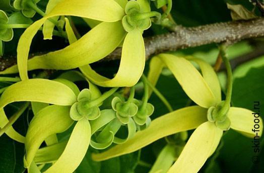 Aromaterapiya-sekrety-aromatov-4